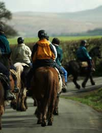 Sport Leisure Riding Horse Riding Riding